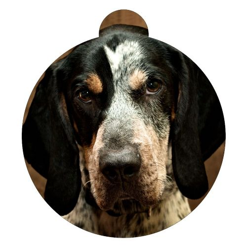 Bluetick Coonhound Picture ID tag